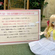 3月SD・DD合同撮影会中止のお知らせ